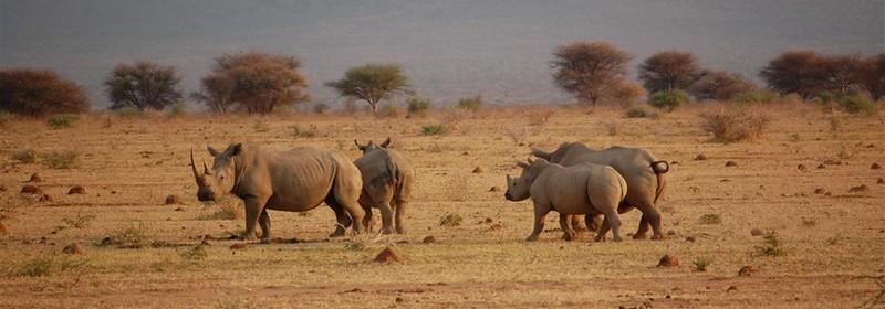 Pilanesberg national reserve rhino trust