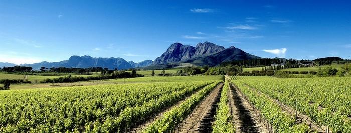 vins-en-afrique-du-sud