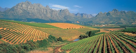 circuit-vignoble-cape-town-safari-stellenbosch