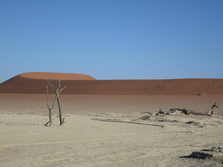 desert-du-namib-deadvlei-acacias